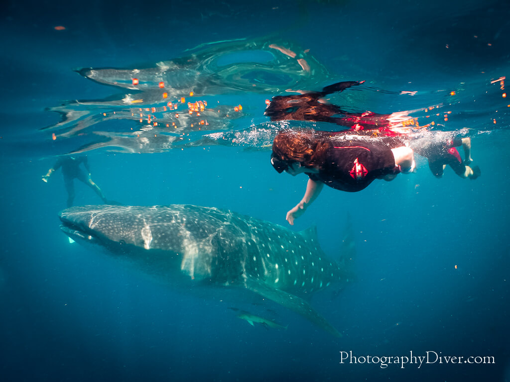 Whale-Shark-Tours-Cancun-Riviera-Maya-167