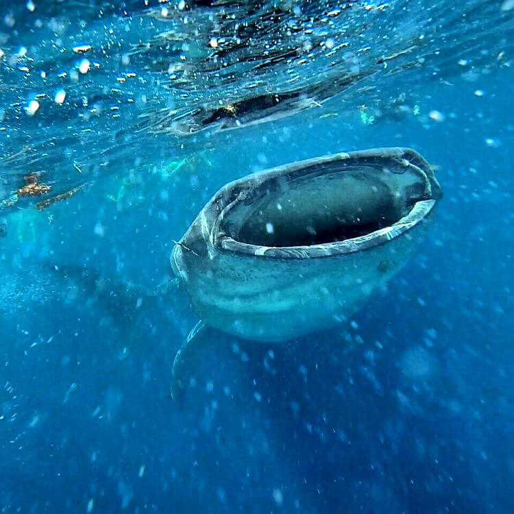 Whale-Shark-Tours-Cancun-Riviera-Maya-7