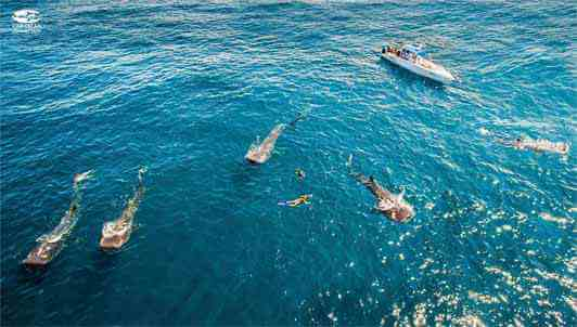 Whale-Shark-Tours-Snorkel-Cancun-Isla-Mujeres-Riviera-Maya-11