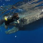 Isla Mujeres - Cancun - Whale Shark Tours - Caribbean Connection -20