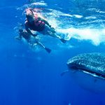 Isla Mujeres - Cancun - Whale Shark Tours - Caribbean Connection -47