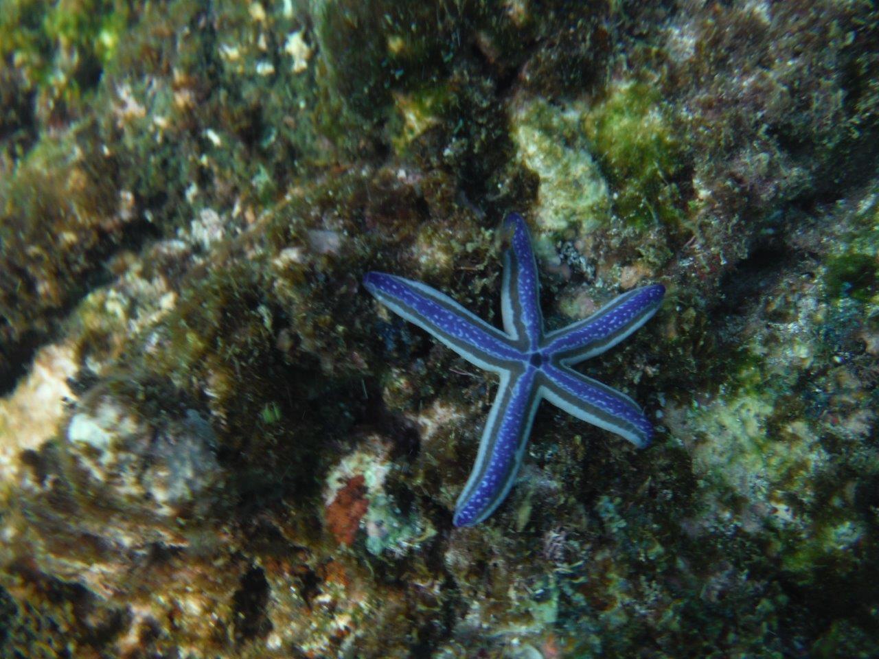 Star Fish Carrillo Adventures