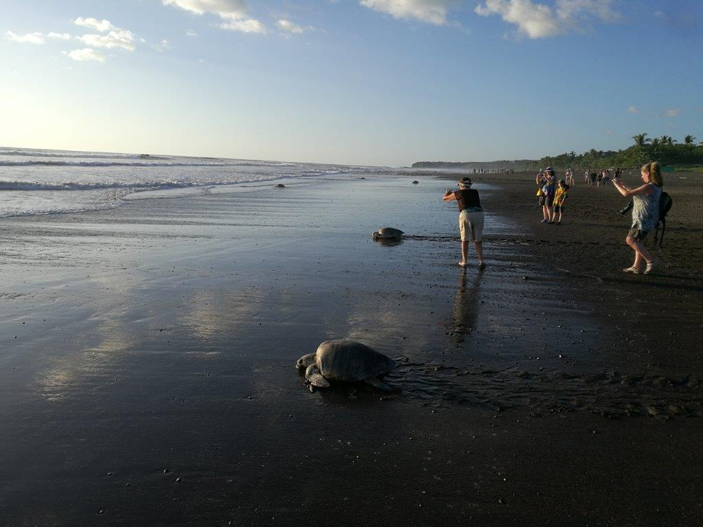 Carrillo-Adventures-Sea-Turtle-Tour-3