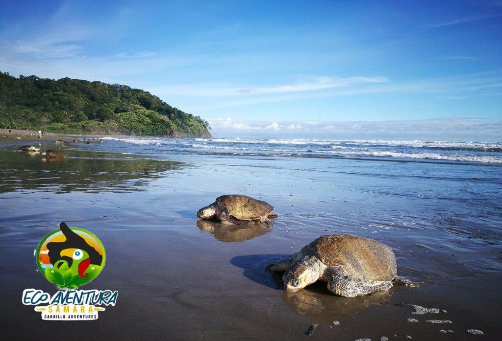 Carrillo-Adventures-Sea-Turtle-Tour-4