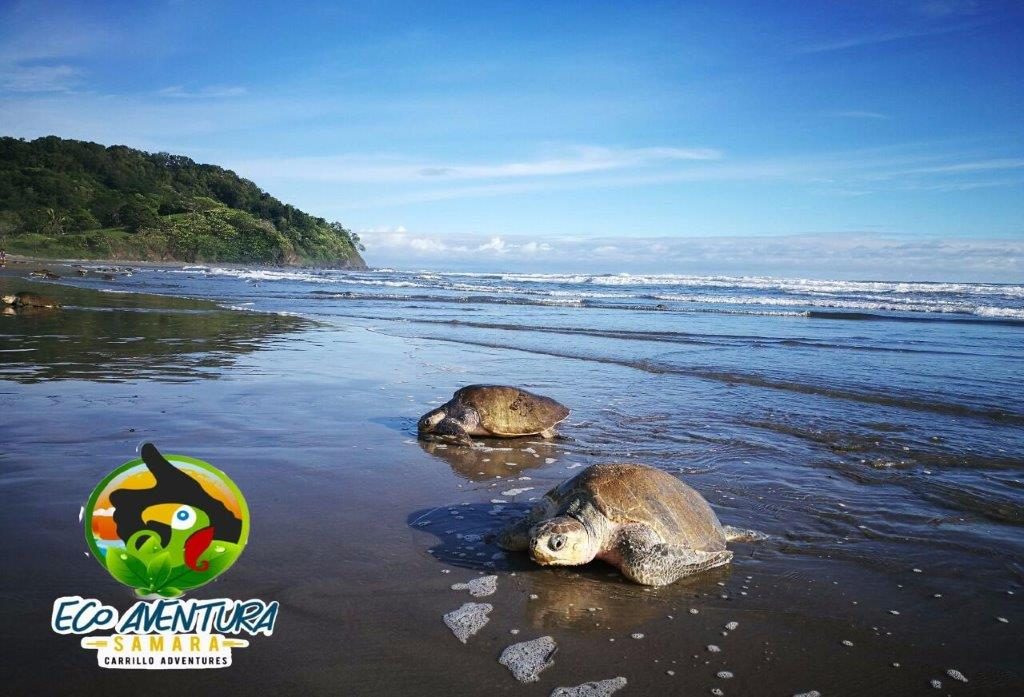 Carrillo-Adventures-Sea-Turtle-Tour-5