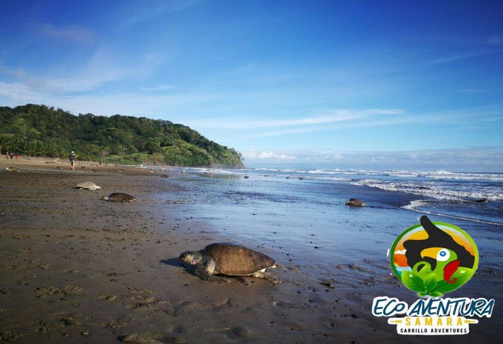 Carrillo-Adventures-Sea-Turtle-Tour-7