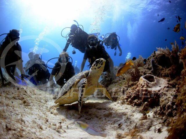 Cancun-Scuba-Diving-Beginner-Dive-Lesson-3