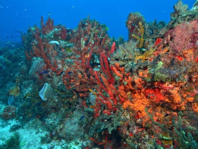 Cancun-Scuba-Diving-Beginner-Dive-Lesson-4