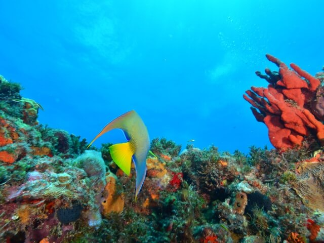 Cancun-Scuba-Diving-Beginner-Dive-Lesson-5