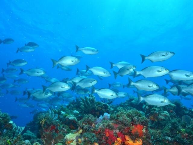 Cancun-Scuba-Diving-Beginner-Dive-Lesson-6