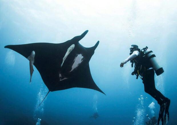 Cancun-Scuba-Diving-Dive-Trip-MUSA-Manchones-Reef-1