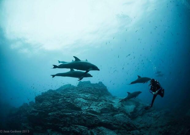 Cancun-Scuba-Diving-Dive-Trip-MUSA-Manchones-Reef-2