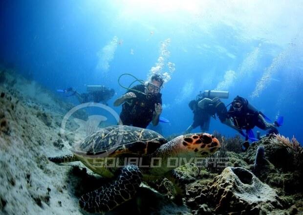 Cancun-Scuba-Diving-Dive-Trip-MUSA-Manchones-Reef-4