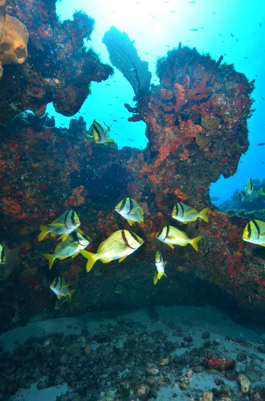 Coral-Reef-Cancun-Dive-Center-Caribbean-Connections-1