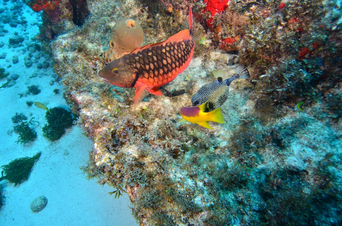 Coral-Reef-Cancun-Dive-Center-Caribbean-Connections-10
