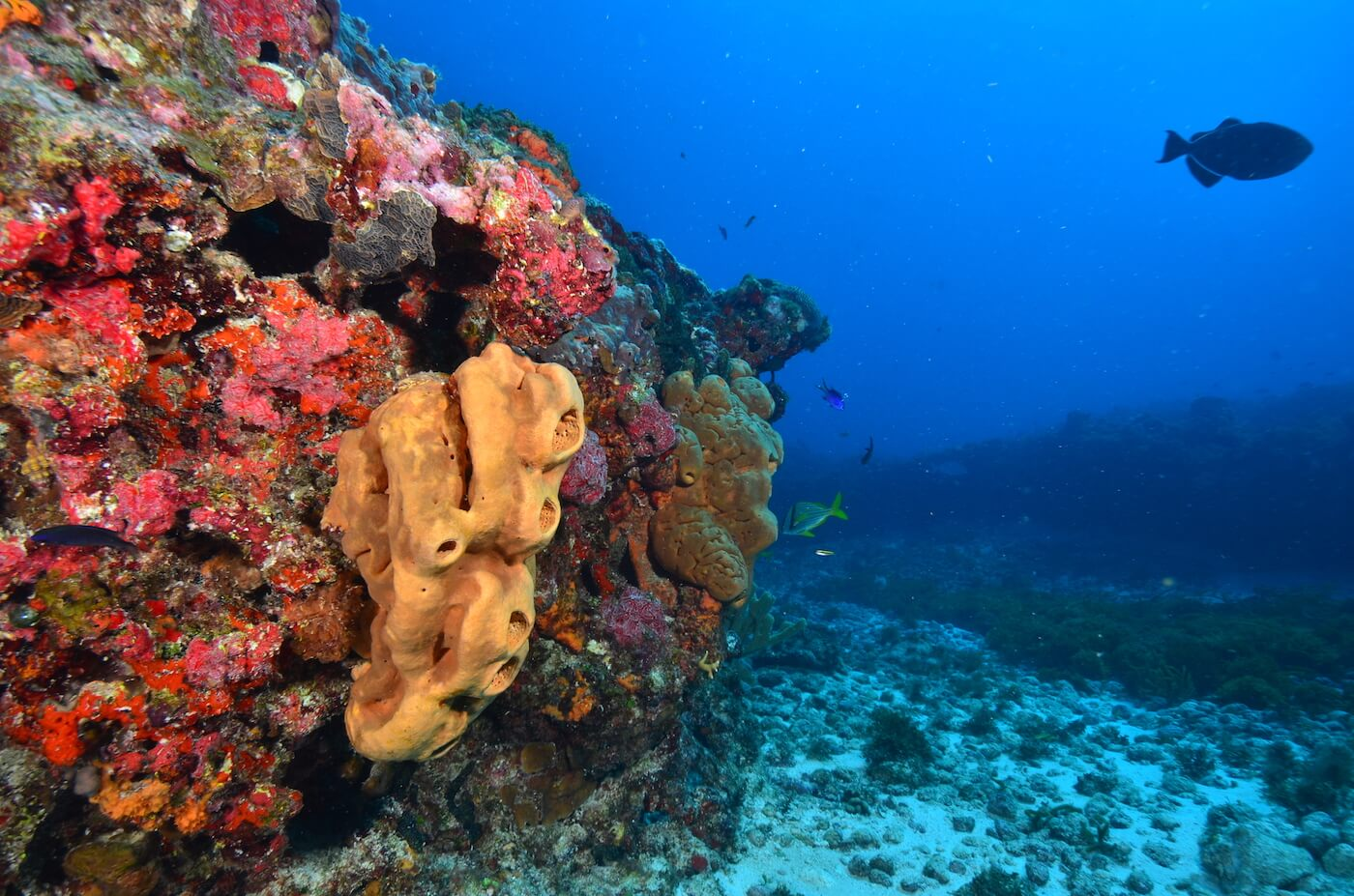 Coral-Reef-Cancun-Dive-Center-Caribbean-Connections-11