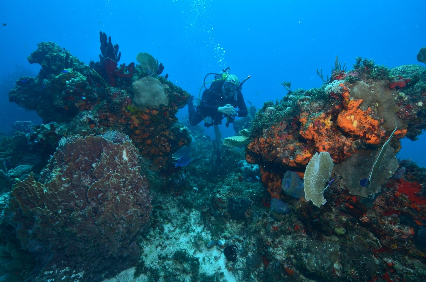 Coral-Reef-Cancun-Dive-Center-Caribbean-Connections-16
