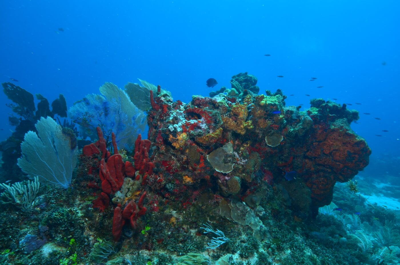 Coral-Reef-Cancun-Dive-Center-Caribbean-Connections-17