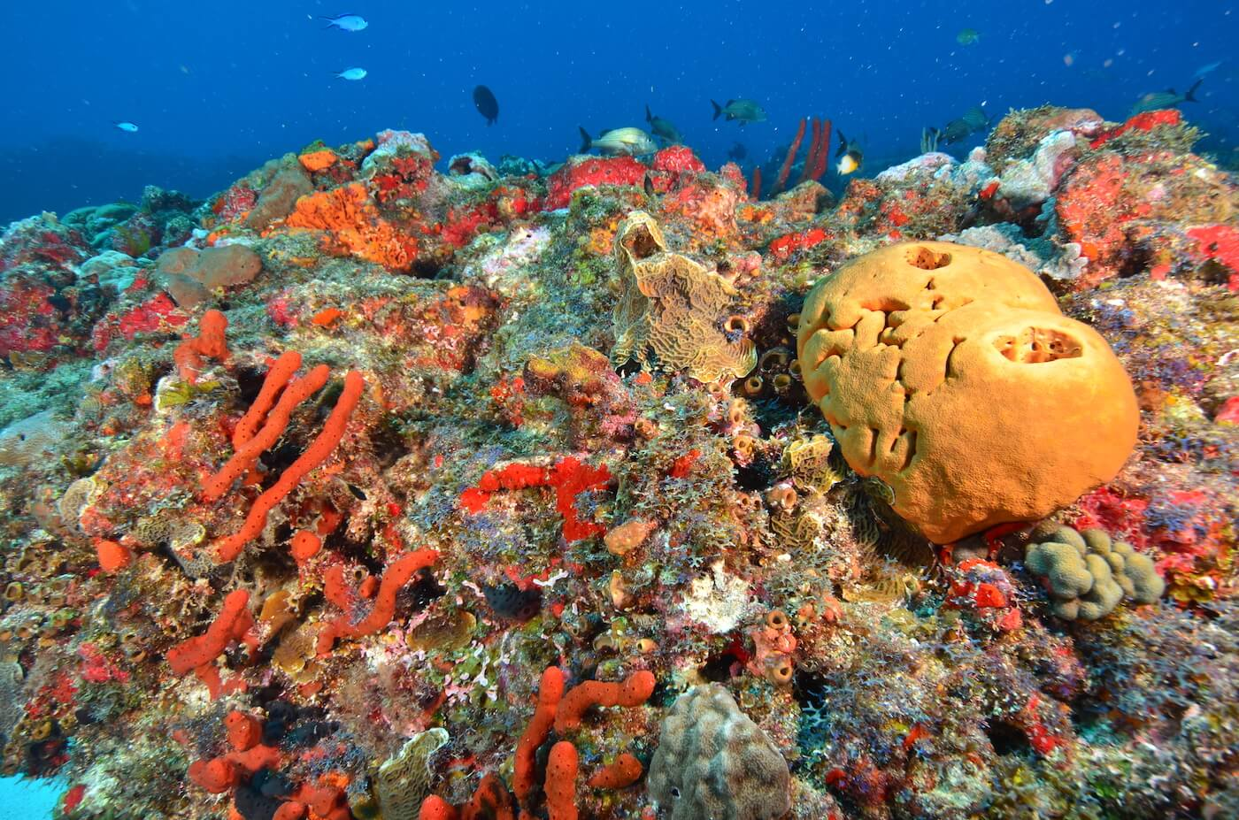 Coral-Reef-Cancun-Dive-Center-Caribbean-Connections-3