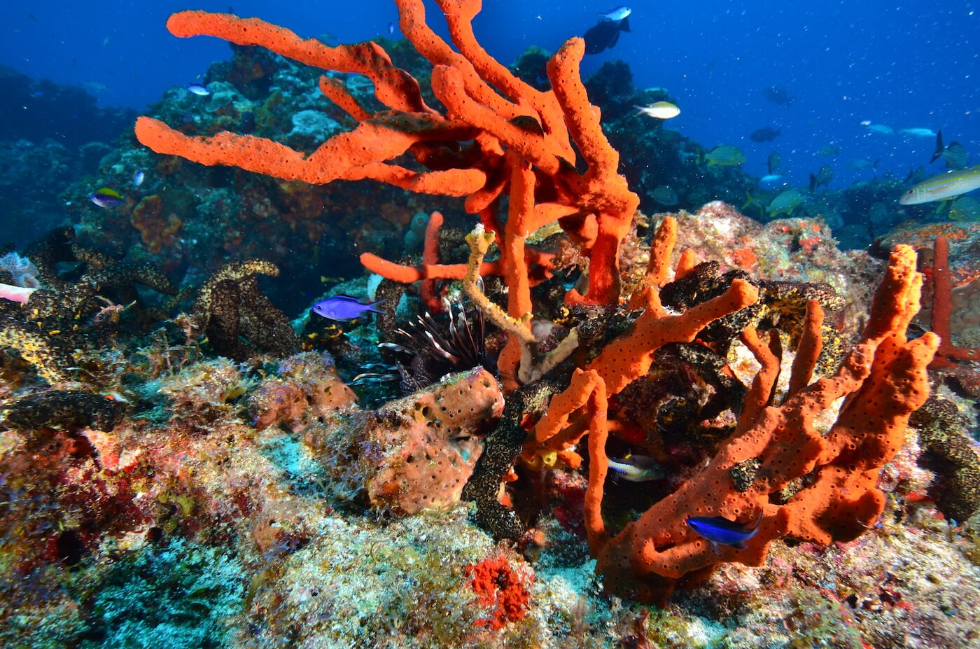 Coral-Reef-Cancun-Dive-Center-Caribbean-Connections-4