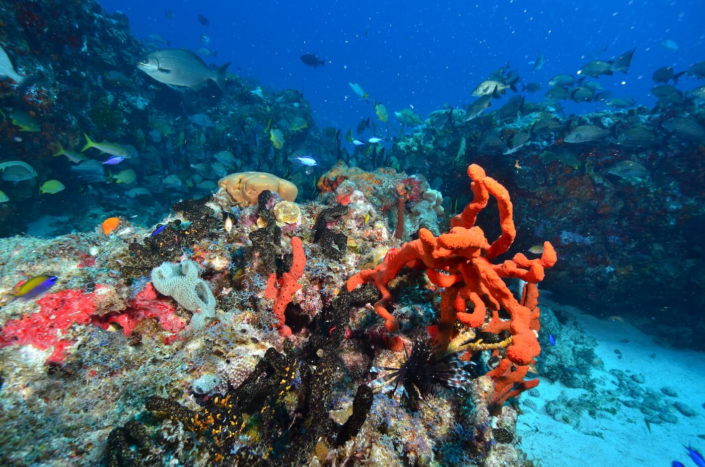 Coral-Reef-Cancun-Dive-Center-Caribbean-Connections-5