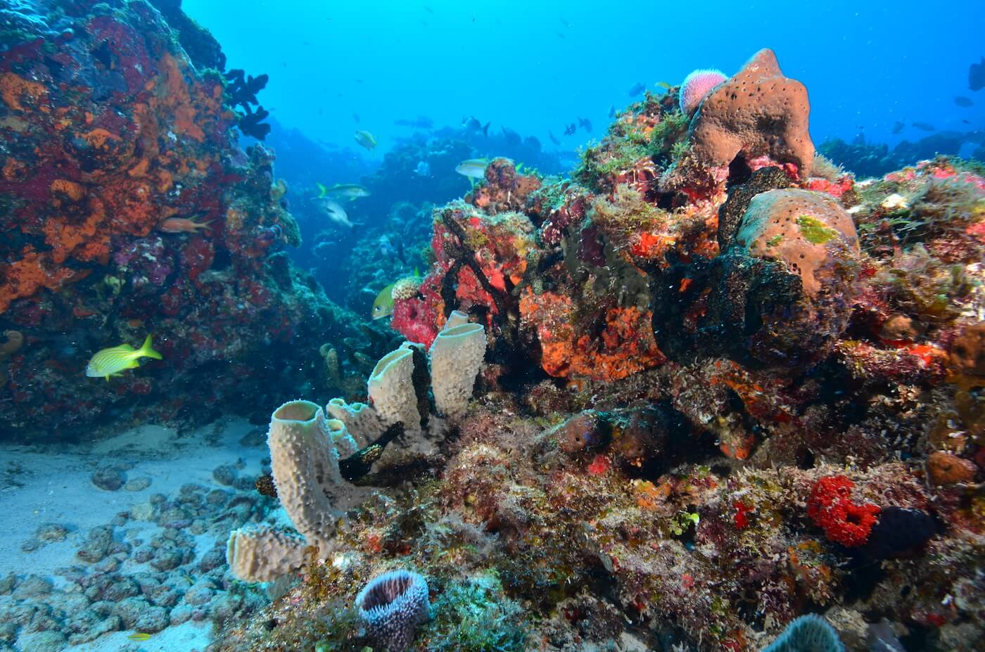 Coral-Reef-Cancun-Dive-Center-Caribbean-Connections-6