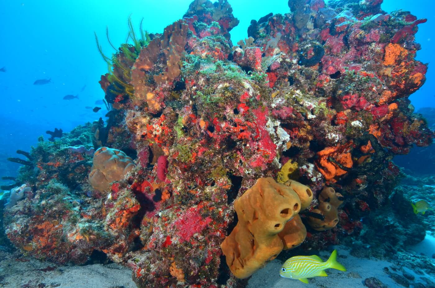 Coral-Reef-Cancun-Dive-Center-Caribbean-Connections-7