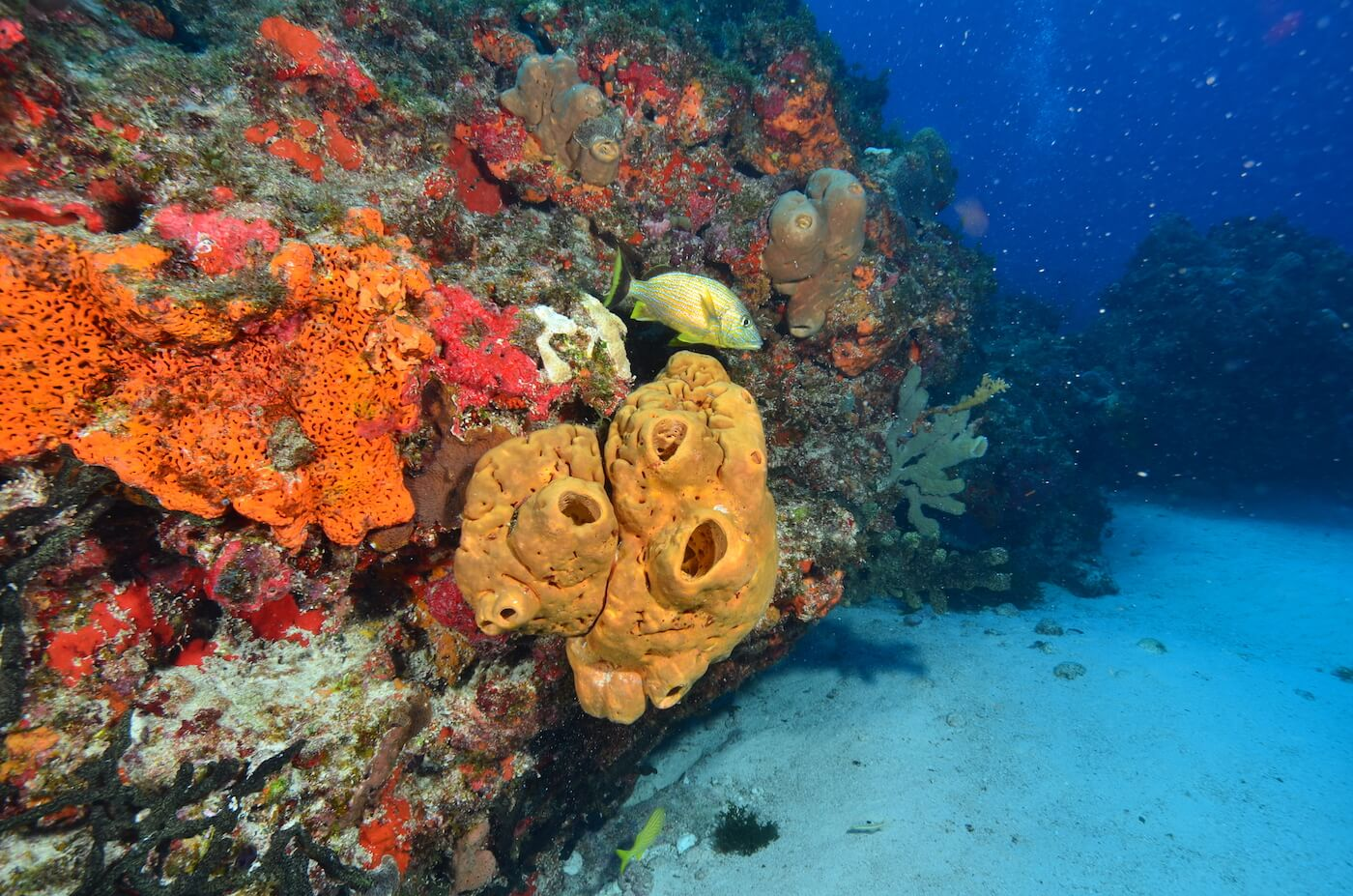 Coral-Reef-Cancun-Dive-Center-Caribbean-Connections-8