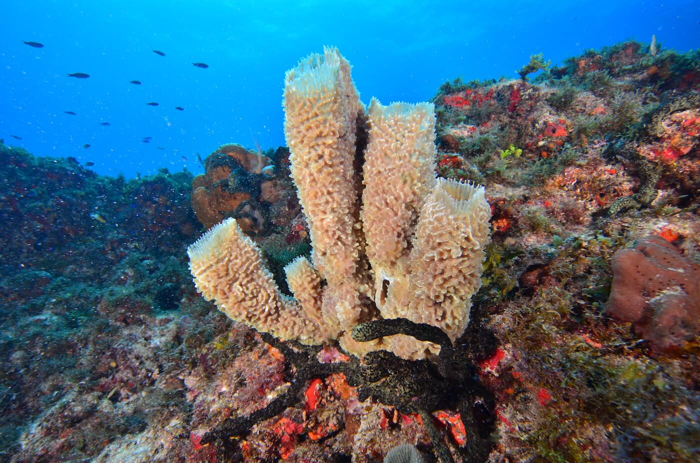 Coral-Reef-Cancun-Dive-Center-Caribbean-Connections-9