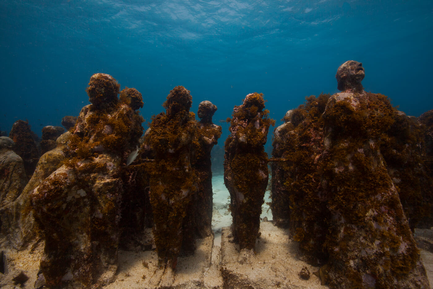 MUSA-Underwater-Museum-Cancun-Dive-Center-Caribbean-Connections-13