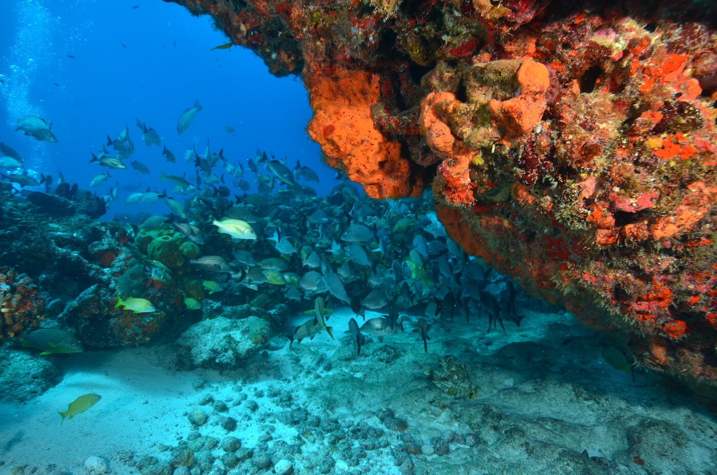 Marine-Wildlife-Cancun-Dive-Center-Caribbean-Connections-1