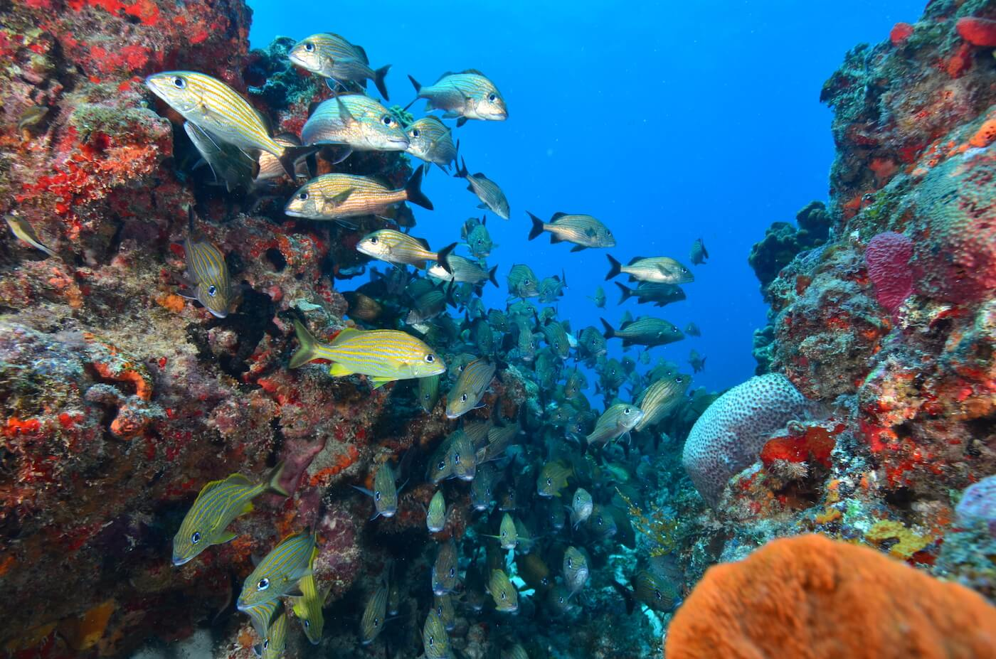 Marine-Wildlife-Cancun-Dive-Center-Caribbean-Connections-11