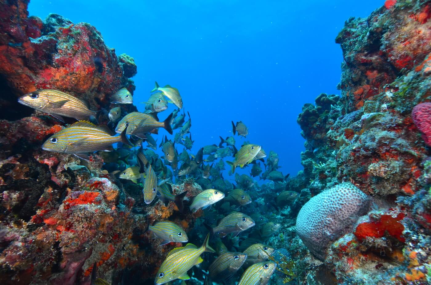 Marine-Wildlife-Cancun-Dive-Center-Caribbean-Connections-12