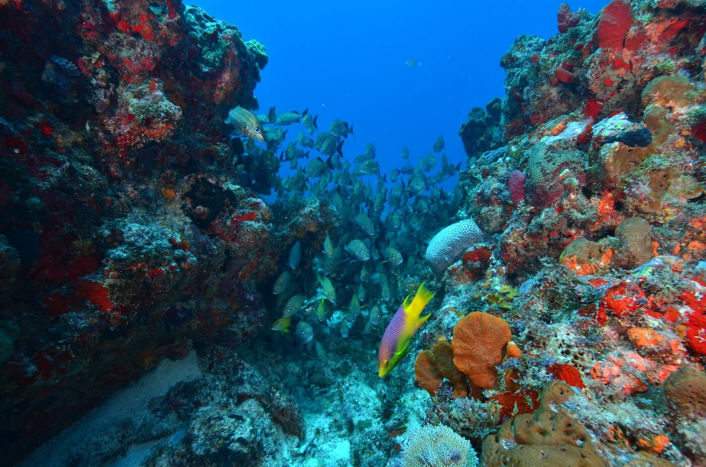 Marine-Wildlife-Cancun-Dive-Center-Caribbean-Connections-13