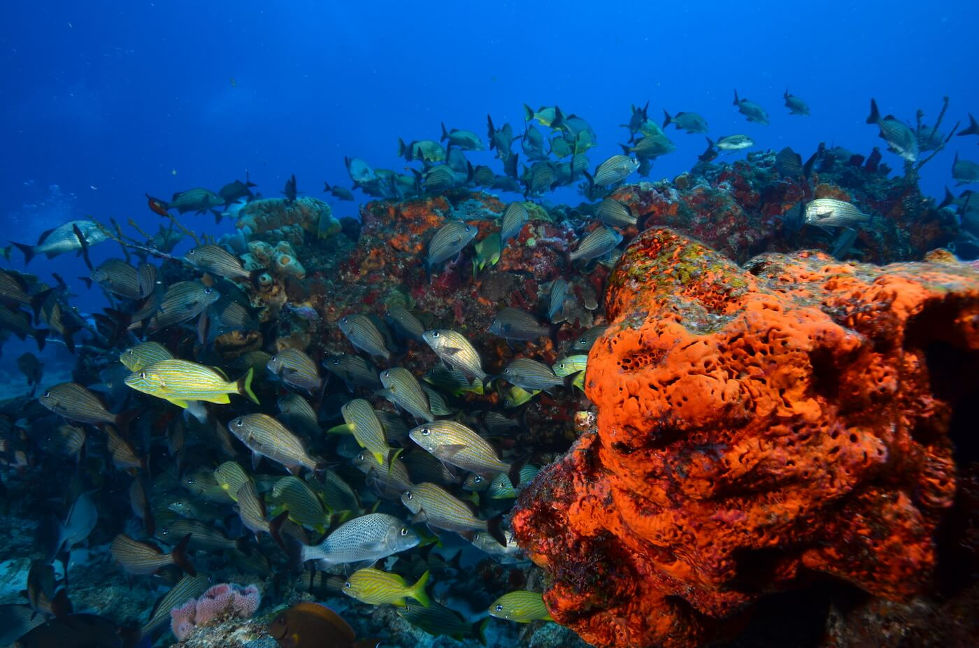 Marine-Wildlife-Cancun-Dive-Center-Caribbean-Connections-3