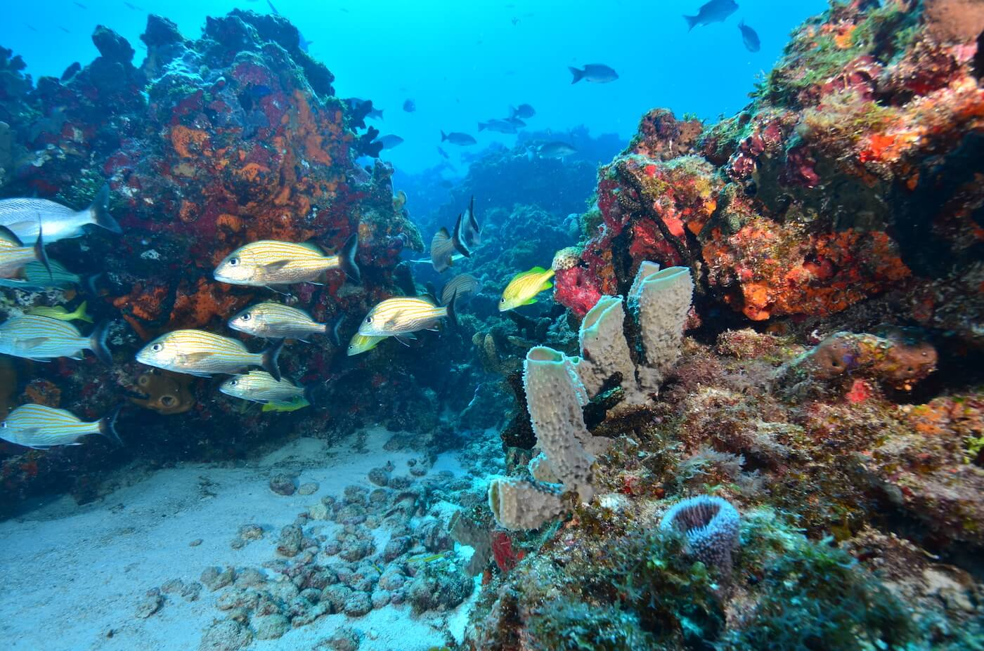 Marine-Wildlife-Cancun-Dive-Center-Caribbean-Connections-4