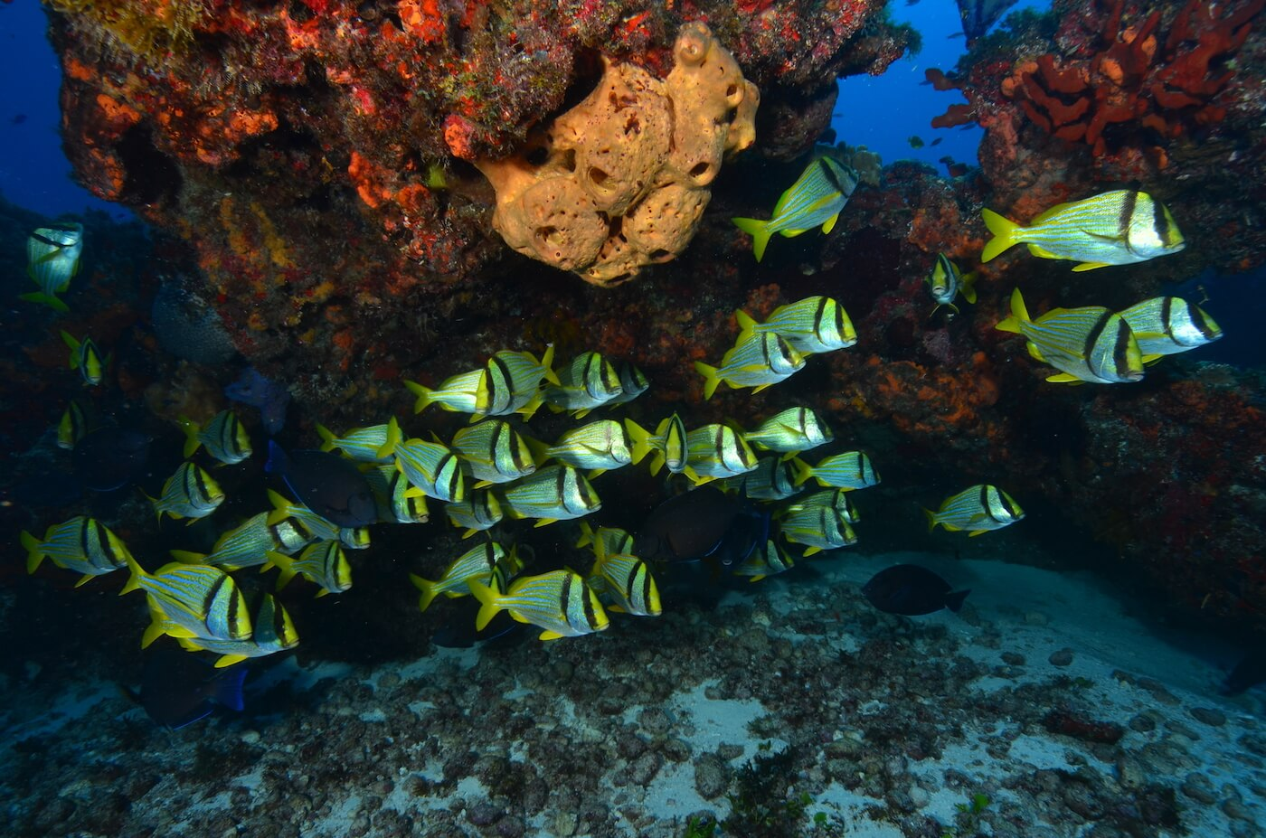 Marine-Wildlife-Cancun-Dive-Center-Caribbean-Connections-6