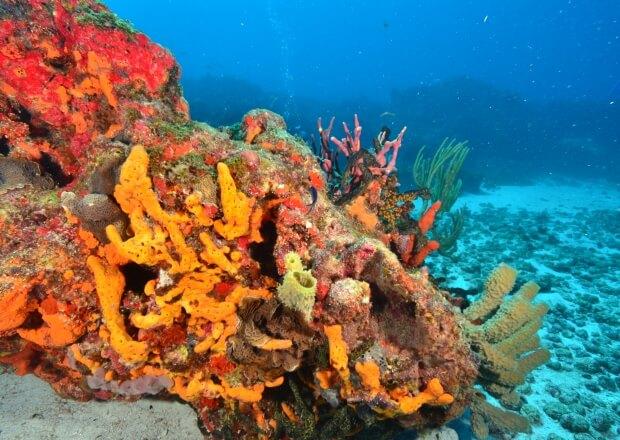 PADI-Advanced-Scuba-Dive-Certification-Course-Cancun-Riviera-Maya-1