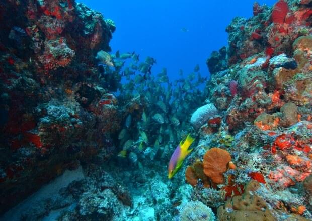 PADI-Advanced-Scuba-Dive-Certification-Course-Cancun-Riviera-Maya-6