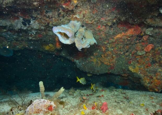 PADI-Referral-Scuba-Dive-Certification-Course-Cancun-Riviera-Maya-1
