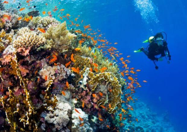 PADI-Referral-Scuba-Dive-Certification-Course-Cancun-Riviera-Maya-2