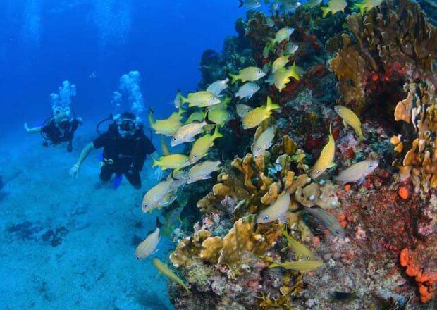 PADI-Referral-Scuba-Dive-Certification-Course-Cancun-Riviera-Maya-3