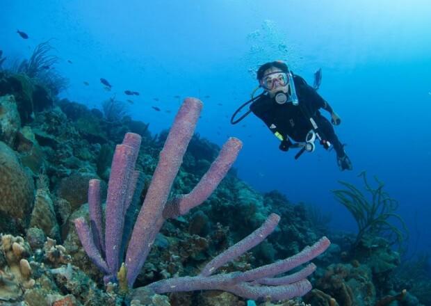 Scuba-Dive-Certification-Course-Cancun-Riviera-Maya-3