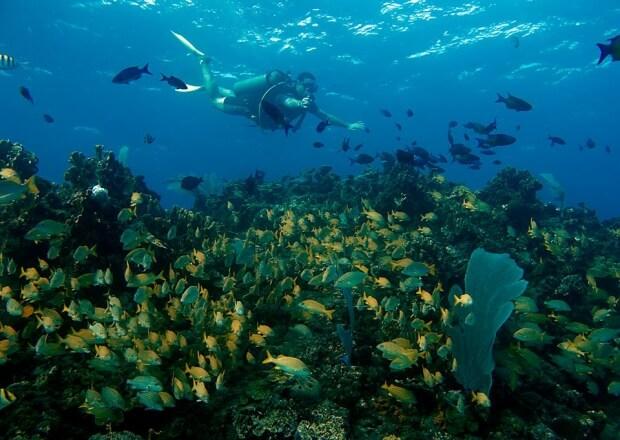 Scuba-Dive-Certification-Course-Cancun-Riviera-Maya-4