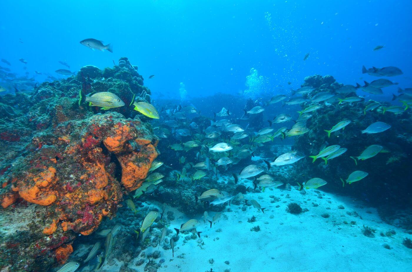 Scuba-Divers_Cancun-Dive-Center-Carbbean-Connection-1