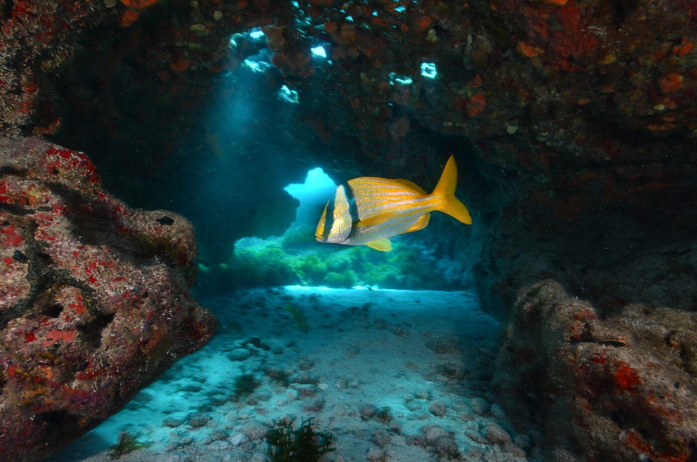 Scuba-Divers_Cancun-Dive-Center-Carbbean-Connection-16
