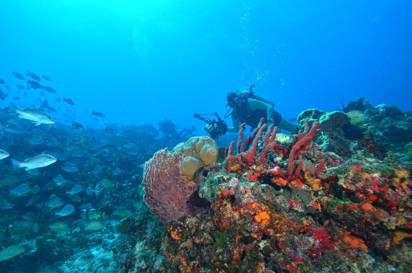 Scuba-Divers_Cancun-Dive-Center-Carbbean-Connection-4