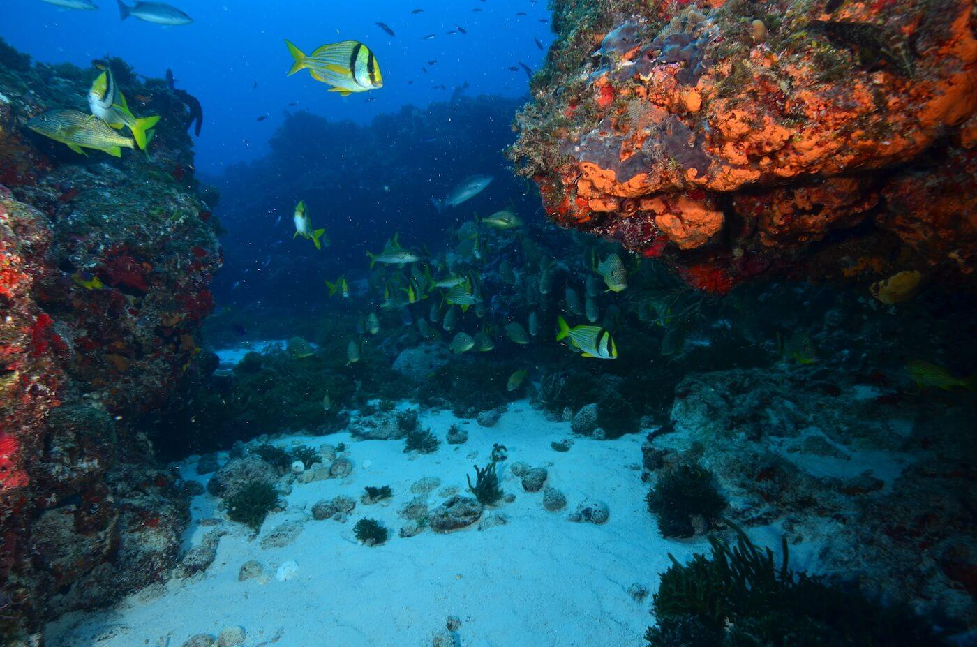 Scuba-Divers_Cancun-Dive-Center-Carbbean-Connection-6