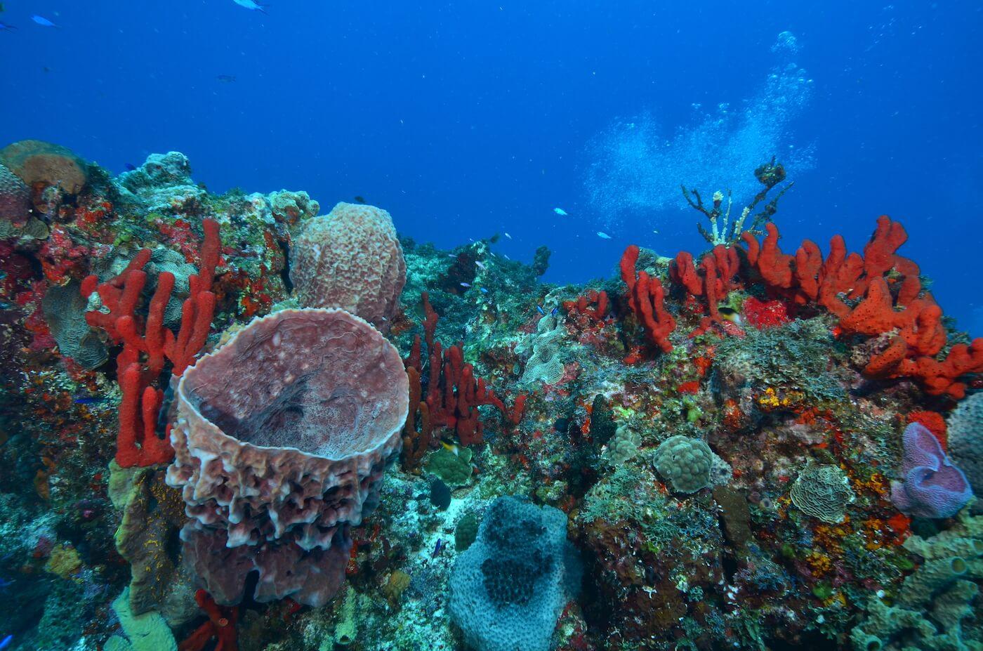 Scuba-Divers_Cancun-Dive-Center-Carbbean-Connection-7