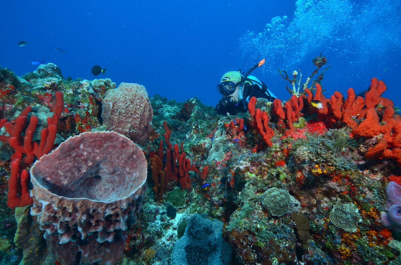 Scuba-Divers_Cancun-Dive-Center-Carbbean-Connection-8